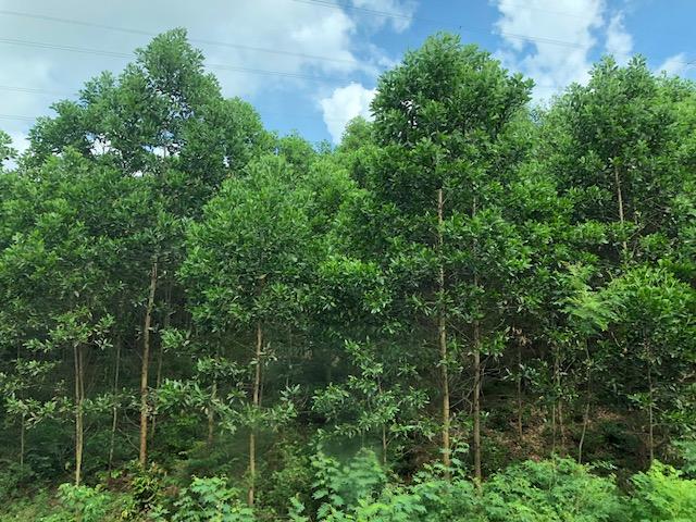 Xuất khẩu gỗ vào Liên minh Châu Âu EU và quy định mới về chứng chỉ FLEGT